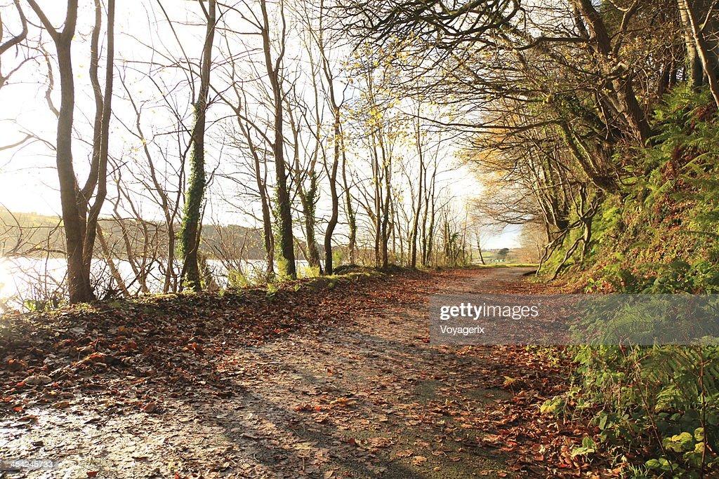 Autumn Pathway. Co.Cork, Ireland. : Stock Photo