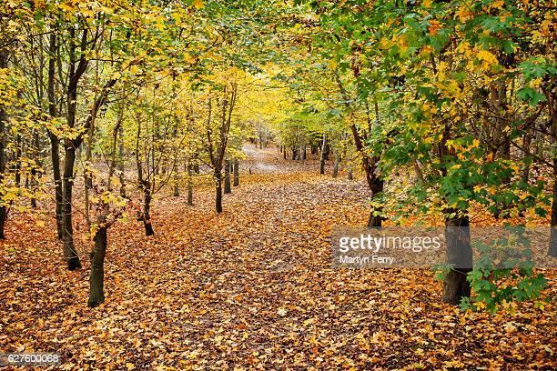 Autumn Pathway, Hinchingbrooke Country Park, Huntingdon, Cambridgeshire, East Anglia, UK