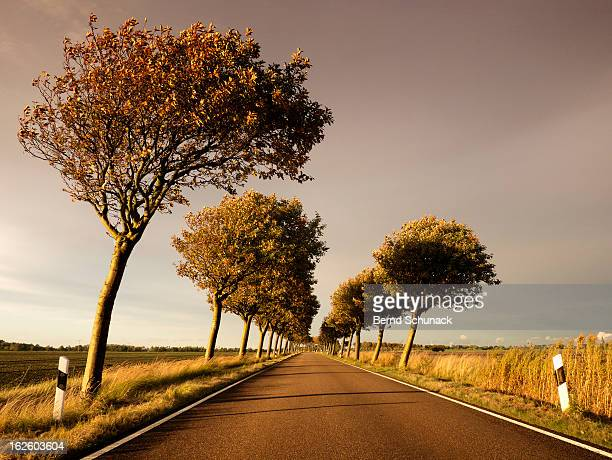 autumn perspective - bernd schunack stock pictures, royalty-free photos & images