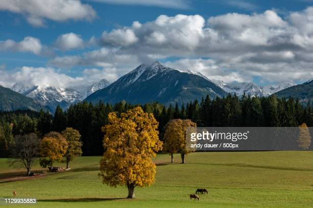 autumn - andy dauer stock photos and pictures