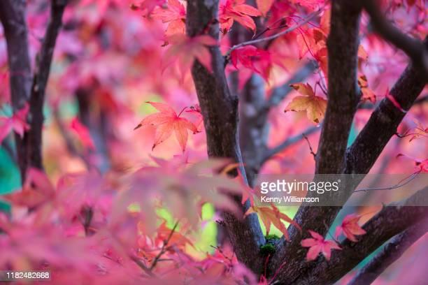 autumn - season stock pictures, royalty-free photos & images