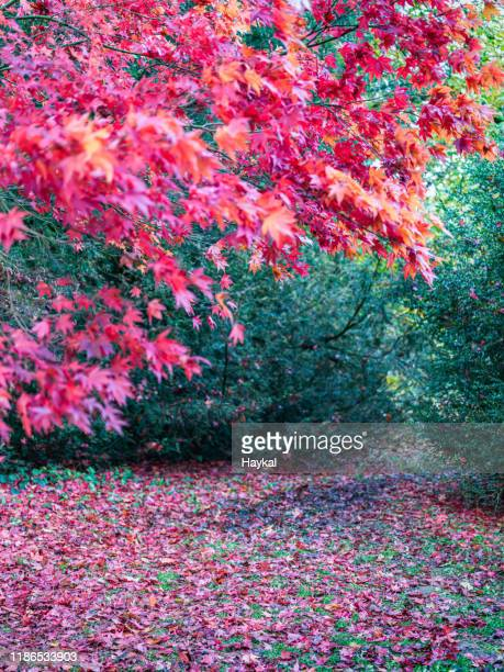 autumn! - tetbury stock pictures, royalty-free photos & images
