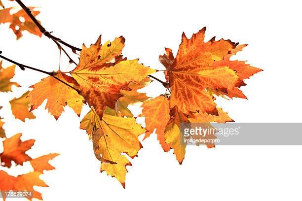 Den Herbst