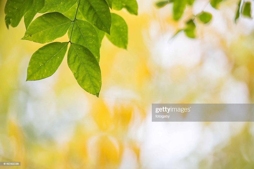 Outono : Foto de stock