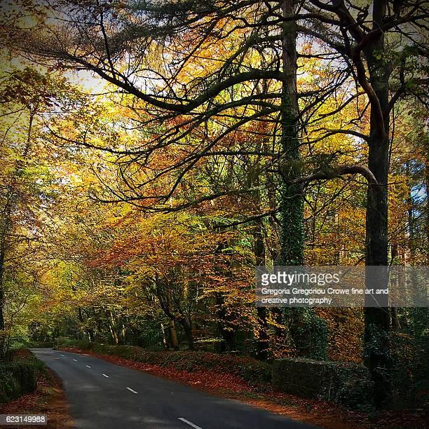 autumn - gregoria gregoriou crowe fine art and creative photography stockfoto's en -beelden