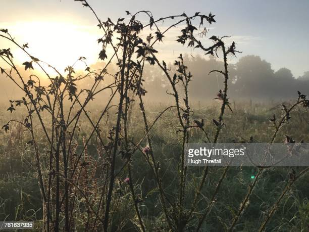 autumn  - hugh threlfall stock pictures, royalty-free photos & images