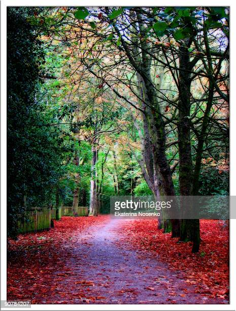 autumn - holland park stock pictures, royalty-free photos & images