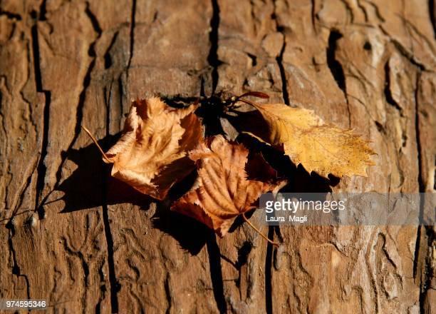 autumn - laura rau stock-fotos und bilder