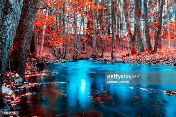 autumn - bald cypress tree stock photos and pictures