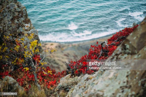 autumn plants on the background of the sea. - ukraine stock pictures, royalty-free photos & images