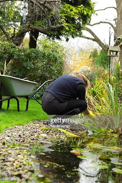 Automne étang jardinage