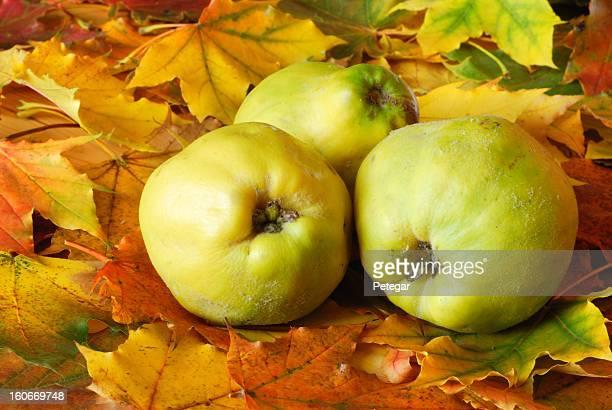 Membrillo Frutas otoñales