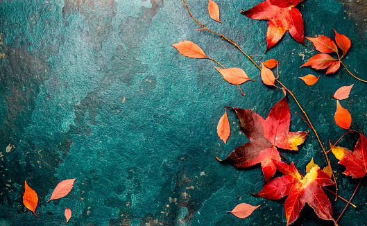 Autumn red leaves on blue turquoise background. Copy space. Top view 1013913568