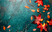 Autumn red leaves on blue turquoise background. Copy space. Top view