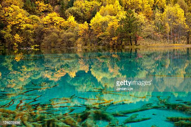 Autumn reflection in lake wuhuahai in jiuzhaigou