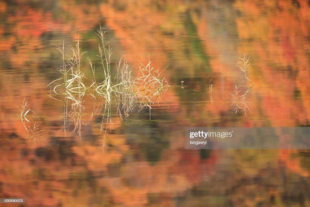 Autumn Reflection : ストックフォト