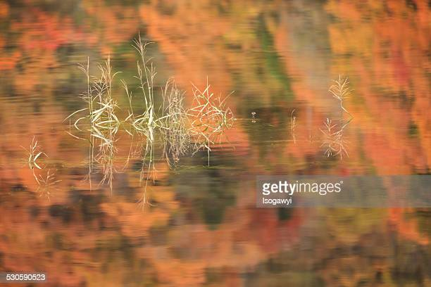 autumn reflection - isogawyi stock pictures, royalty-free photos & images
