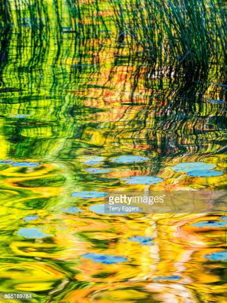 autumn reflections on council lake in hiawatha national forest michigan - hiawatha national forest stock pictures, royalty-free photos & images
