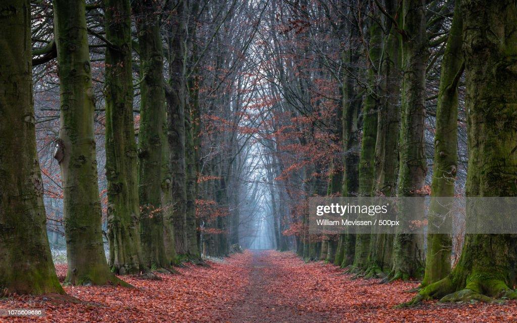 Autumn Reminiscing : Stockfoto
