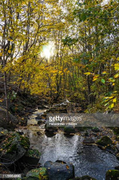 autumn river - bergen - hordaland county stock pictures, royalty-free photos & images