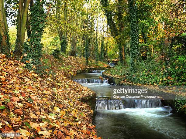 autumn river - hertfordshire stock pictures, royalty-free photos & images