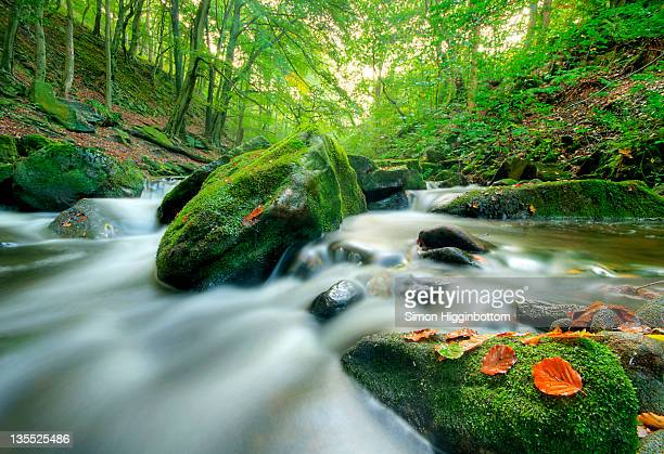 autumn river, west yorkshire - simon higginbottom stock pictures, royalty-free photos & images