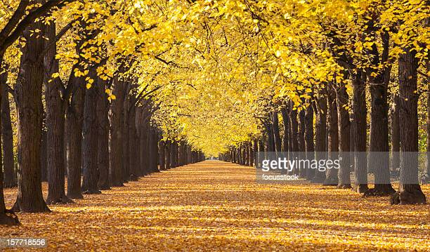 autumn road and alley - avenue stock pictures, royalty-free photos & images
