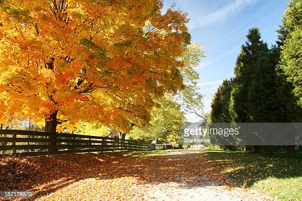 autumn road ohio - ohio stock photos and pictures