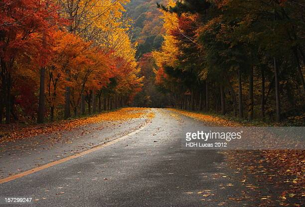 autumn road - united_states_senate_election_in_virginia,_2012 stock pictures, royalty-free photos & images