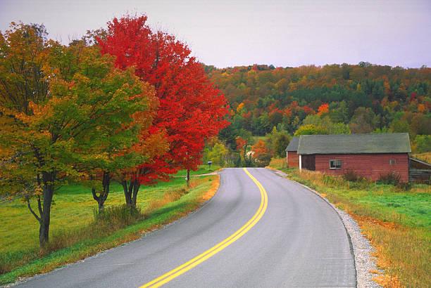 Autumn Road Wall Art