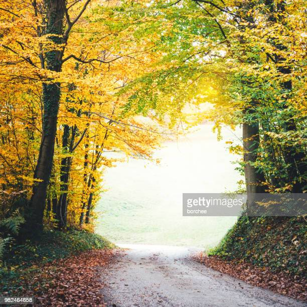 autumn road - beech tree stock pictures, royalty-free photos & images