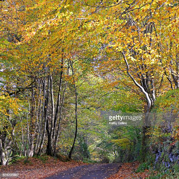 Autumn road with beech and birch