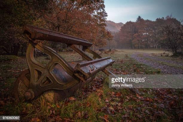 autumn rust - rust colored - fotografias e filmes do acervo