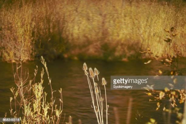 Autumn scene along river bank