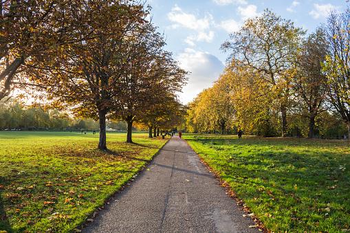 Autumn Scene in the Park 874947174