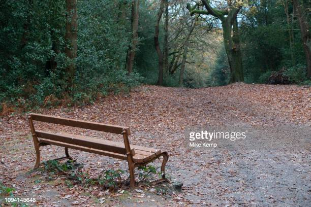Autumn scene of fall leaves and a quiet bench in Sutton Park in Sutton Coldfield, Birmingham, United Kingdom.