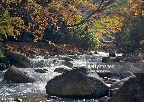 autumn scene over a river - 八幡平市 ストックフォトと画像
