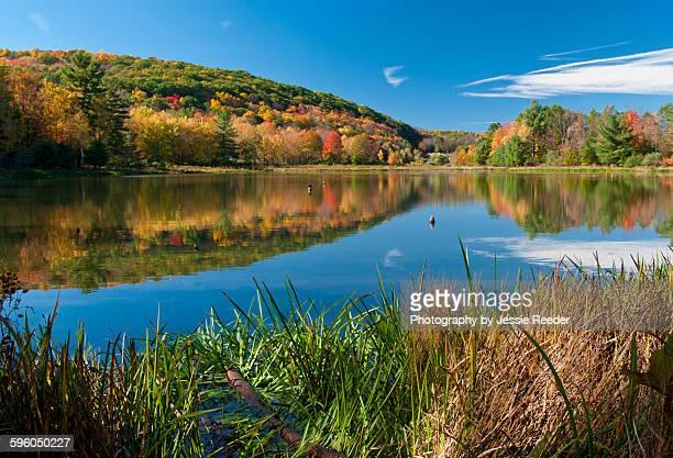autumn scene - ビンガムトン ストックフォトと画像