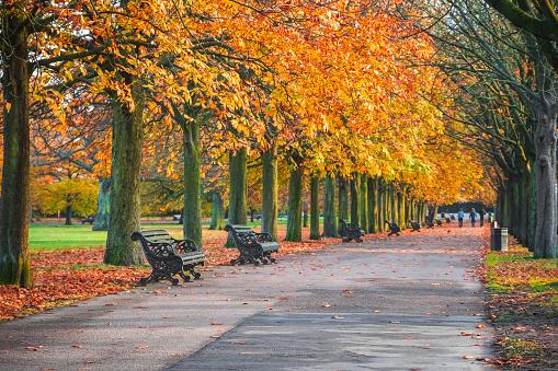 Autumn scene with treelined avenue in Greenwich park, London 1063629128
