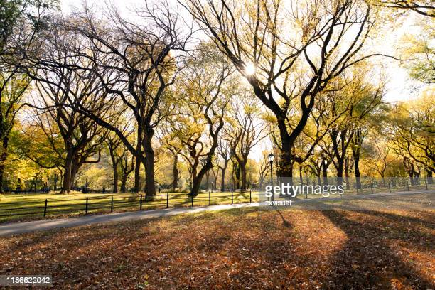 autumn scenery in central park - elm tree stock pictures, royalty-free photos & images