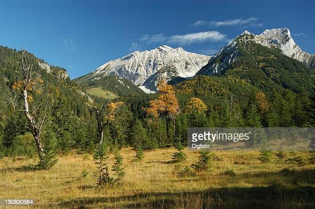 autumn scenery in the engtal, karwendel mountain range, tyrol, austria - laubbaum stock-fotos und bilder