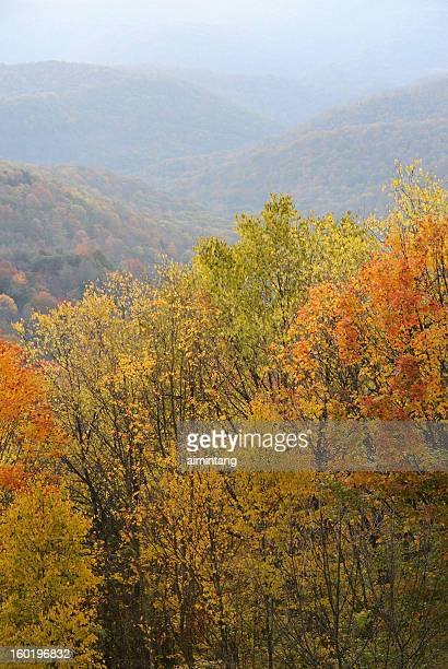 autumn scenery in west virginia - monongahela national forest stock photos and pictures