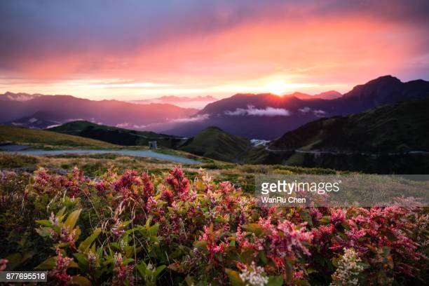 autumn scenery of hehuan mountain hillside at sunrise - ethereal stock pictures, royalty-free photos & images