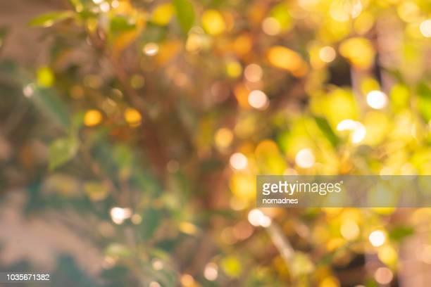 autumn season bokeh background.vibrant and vivid color nature. - オータムインターナショナル ストックフォトと画像