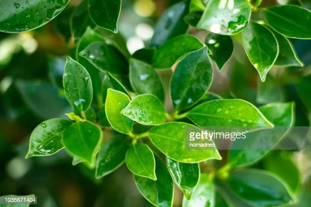 autumn season leaf.vibrant and vivid color nature.love and romantic mood background. - オータムインターナショナル ストックフォトと画像