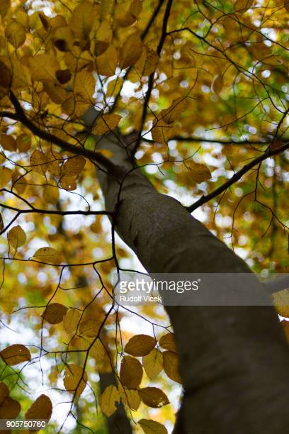 Autumn serene forest scenery, multicoloured foliage, focus on foreground