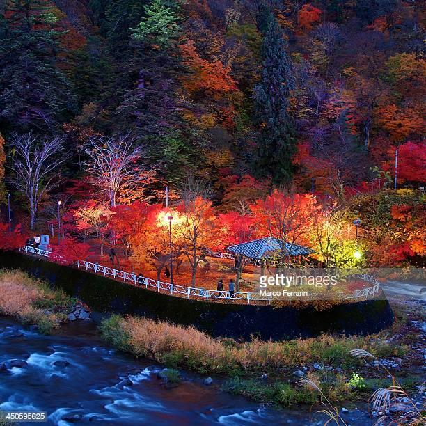 Autumn shine