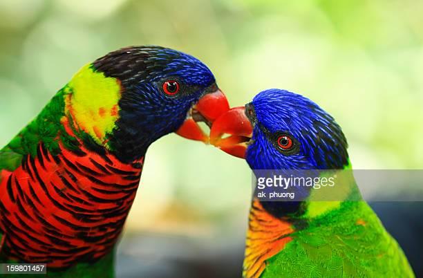 autumn sonata - jurong bird park stock pictures, royalty-free photos & images