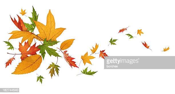 Autumn Spinning