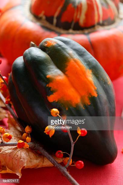 Autumn squash still life with acorn squash